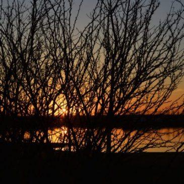 Alberta Sunset Photo Credit Shannyn Rus